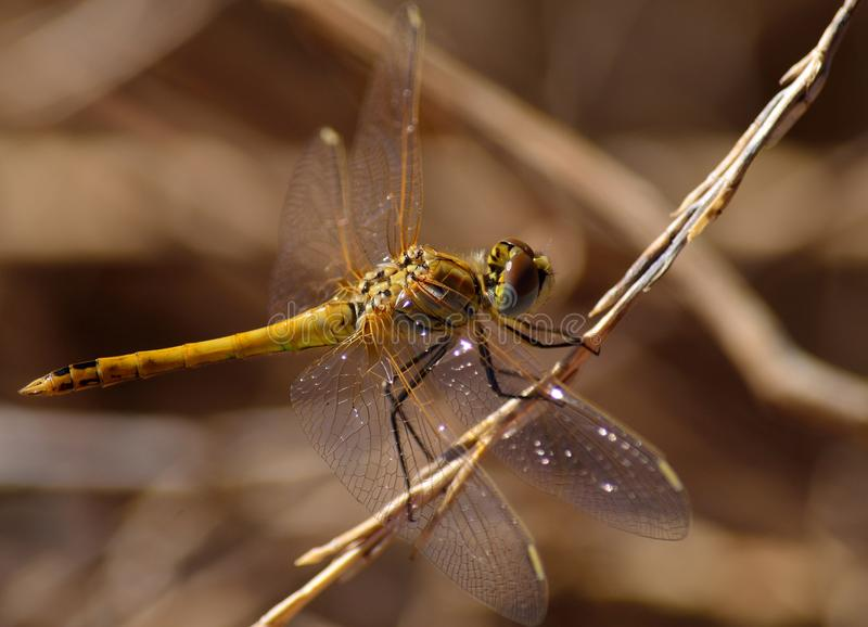Download Beautiful Dragonfly Stock Photo - Image: 83709390