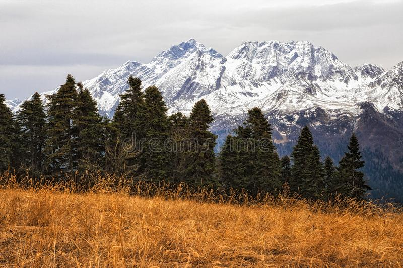 Beautiful dramatic autumn mountain forest and snowy Agepsta peak scenery with fir trees and yellow grass meadow. West Caucasus, royalty free stock photo