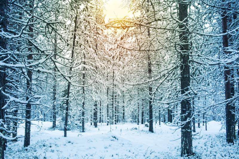 Beautiful and dramatic winter sunset landscape scenery with tree stock photo