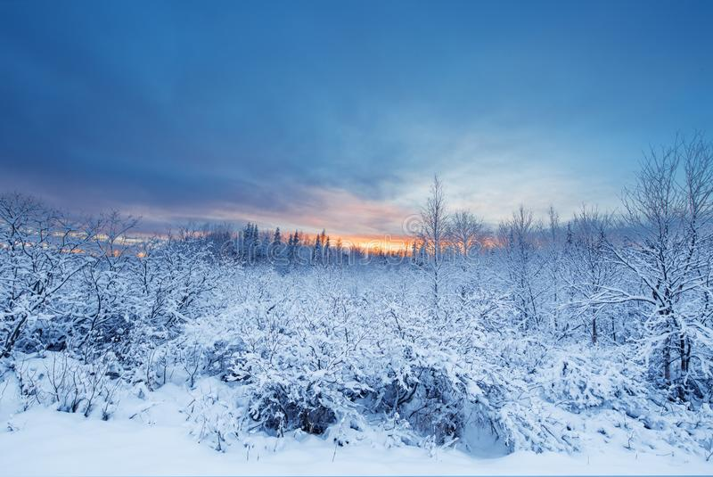 Beautiful and dramatic winter sunset landscape scenery with tree stock photography