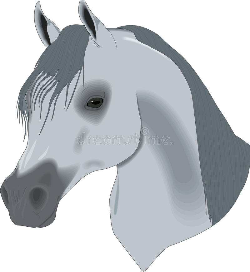 Download Beautiful Drawing, Head Of Horse Stock Vector - Image: 10109977