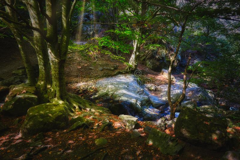 Beautiful dreamy beech forest in a sunny day.  royalty free stock images