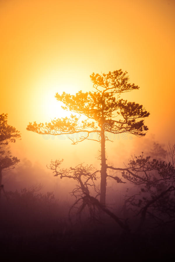 A beautiful, dreamy morning scenery of sun rising above a misty marsh. Colorful, artistic look. Vibrant swamp landscape in North Europe royalty free stock image