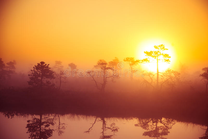 A beautiful, dreamy morning scenery of sun rising above a misty marsh. Colorful, artistic look. Vibrant swamp landscape in North Europe stock images