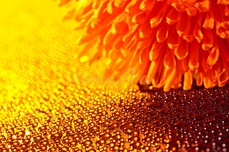 Download Beautiful Drops Of Water And Orange Flower Royalty Free Stock Images - Image: 21962839