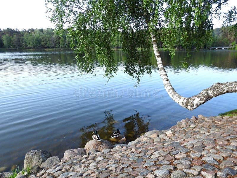 Beautiful Druskonio lake in Druskininkai, Lithuania stock photos