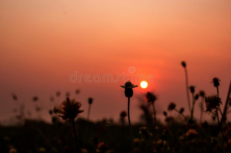 Beautiful dry grass flowers with sunset sky background in countryside landscape,nature outdoor concept royalty free stock photography