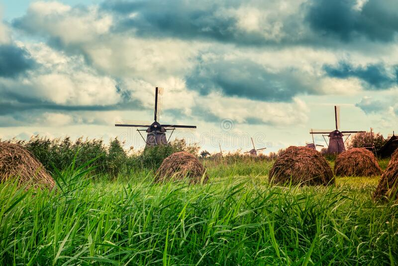 Beautiful Dutch windmills and landscape royalty free stock photo