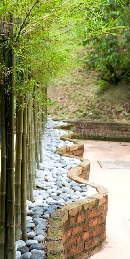 Download Beautiful dwarf bamboo stock image. Image of japan, feng - 4853223