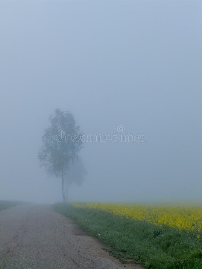 Early morning when the fog covered the area. Beautiful early morning when the fog covered the area royalty free stock photos