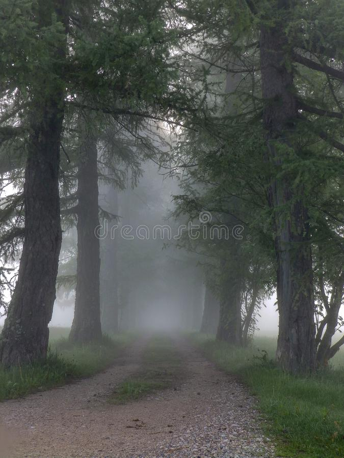 Early morning when the fog covered the area. Beautiful early morning when the fog covered the area stock photography