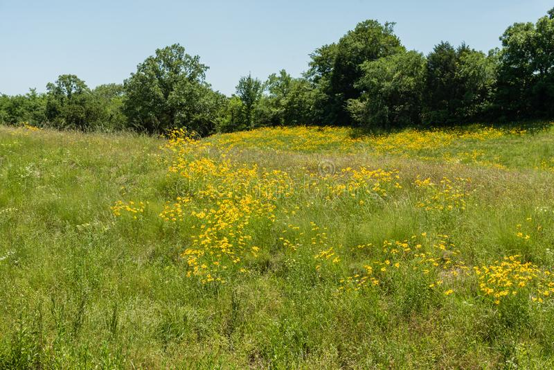 Beautiful eastern Oklahoma vista in springtime royalty free stock images