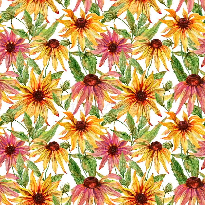 Beautiful echinacea flowers coneflower with leaves on white background. Seamless floral pattern. Watercolor painting. Hand painted botanical illustration stock illustration