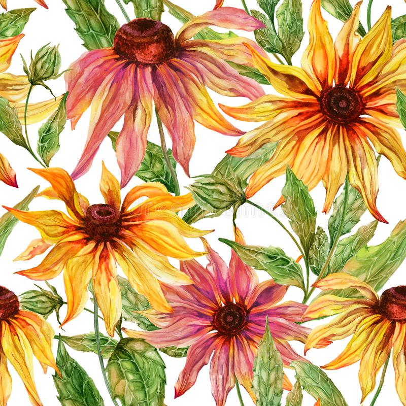 Beautiful echinacea flowers coneflower with leaves on white background. Seamless floral pattern. Watercolor painting. Hand painted botanical illustration vector illustration