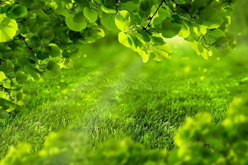 Beautiful eco green defocused spring or summer background with sunshine. Juicy young grass and foliage in rays of sunlight. Nature stock photos