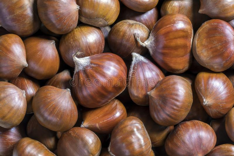 Beautiful Edible Chestnuts Background stock image