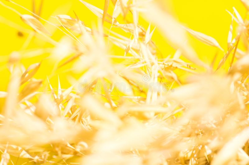 Beautiful elegant autumnal botanical nature background. Blurred field plants oats in golden glow on bright yellow sunlight leaks stock photos