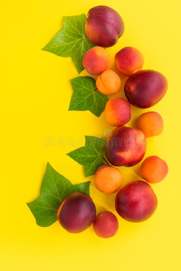 Beautiful elegant composition from ripe juicy red nectarines and apricots decorated with ivy green leaves on sunny yellow stock photo
