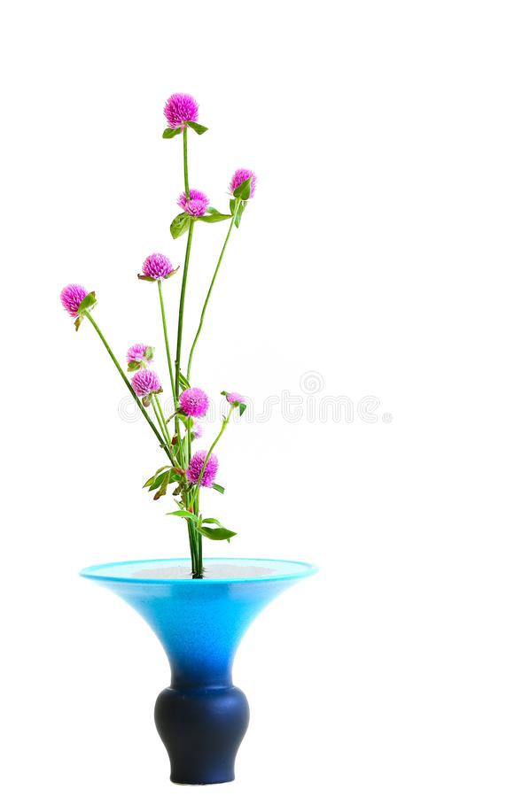 Trifolium pratense or pink clover flowers in blue flower pot. Beautiful and elegant flower arrangement with trifolium pratense or pink clover flowers in a unique stock images