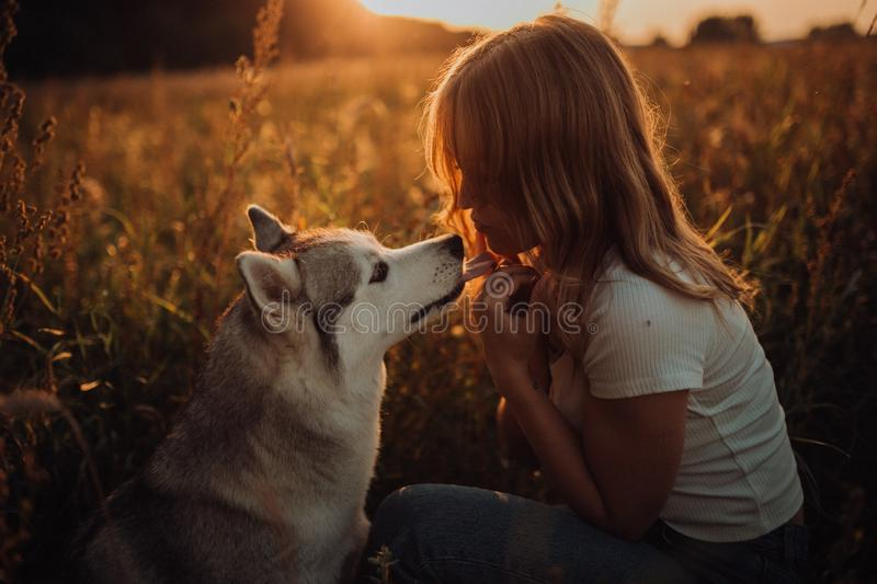 Beautiful elegant girl with dog , sunset. field background royalty free stock image