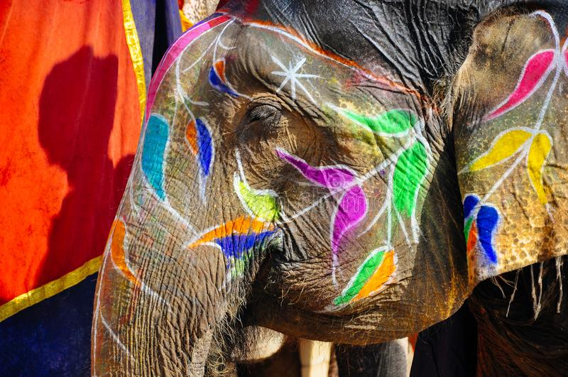 A beautiful colored elephant at the Amber Fort in Jaipur, India. royalty free stock photos
