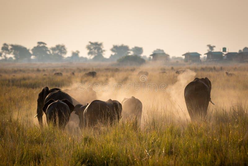 Beautiful elephant in Chobe National Park in Botswana royalty free stock photo