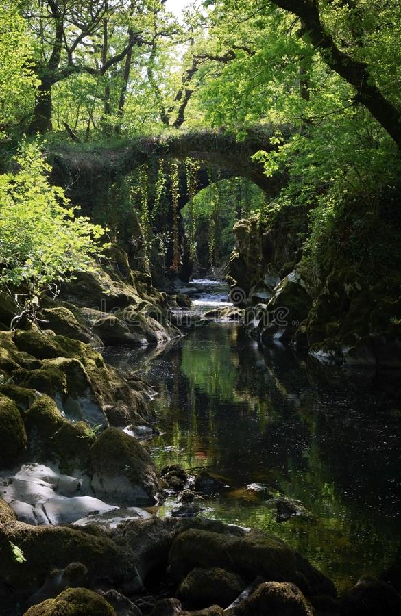 Over grown Faerie bridges spanning a deep gorge to a river. Beautiful and enchanting, over grown with trees, trailing ivy and creepers, the Faerie bridges royalty free stock photography
