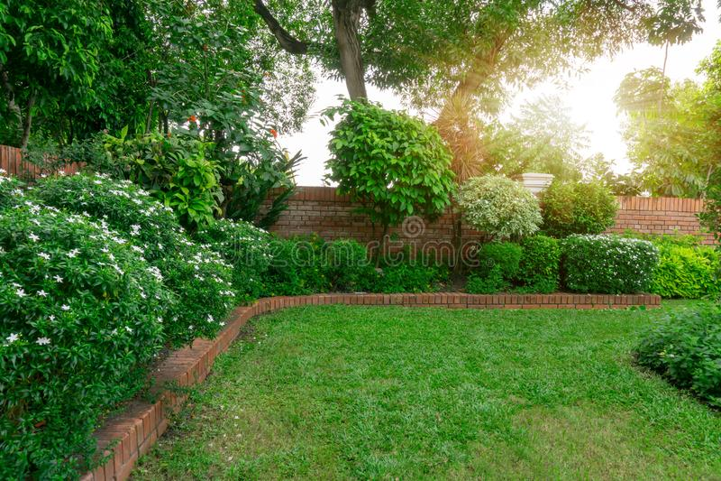 Beautiful English cottage garden, colorful flowering plant on smooth green grass lawn with orange brick wall. And group of evergreen trees on background, in stock images
