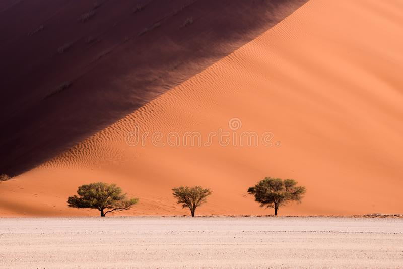 Three trees with wind blowing desert sand over the dune in Sossusvlei, Namibia. stock images