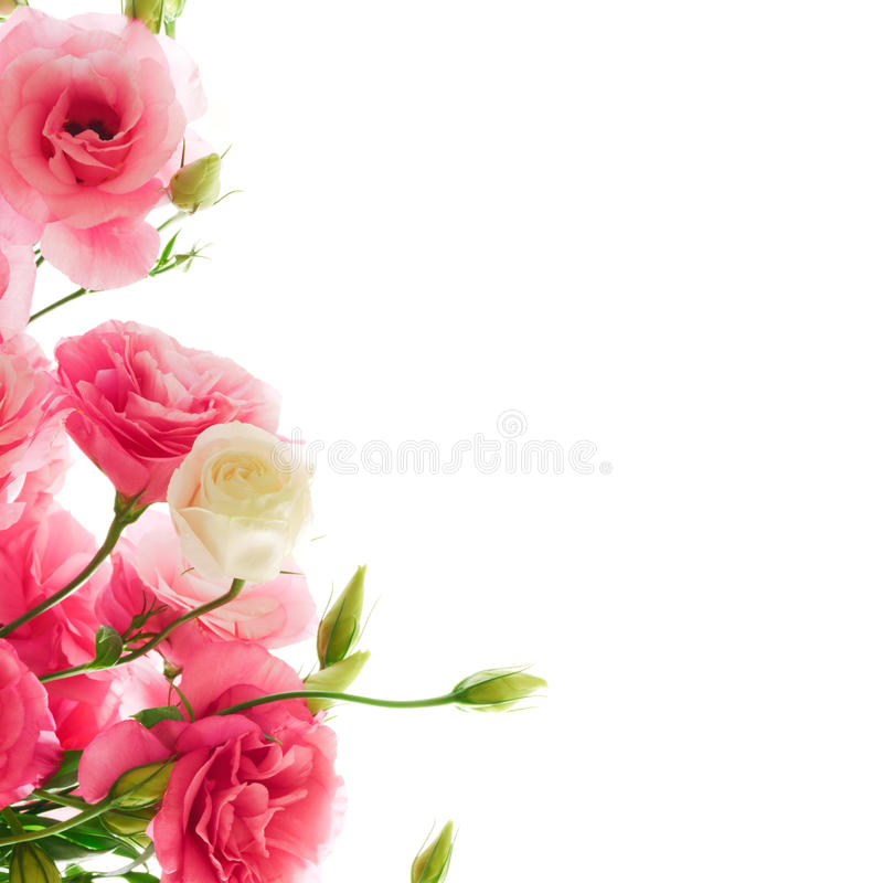 Beautiful eustoma flowers on the white background stock photo download beautiful eustoma flowers on the white background stock photo image of gift fantasy mightylinksfo Image collections