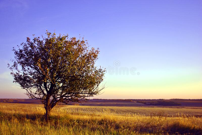 Beautiful evening landscape, purple-blue sky, lonely apple tree in grass meadow, hills with plowed field. On horizon royalty free stock photos