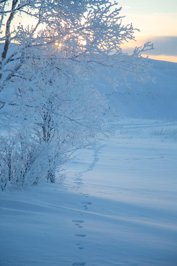 A beautiful evening scenery of a small Norwegian town Roros in winter. Sunset scenery in Norway. stock photo