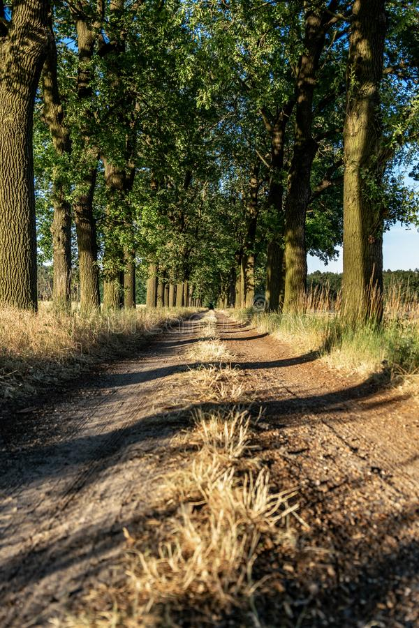 Beautiful evening sunset view of an allee avenue with a line of trees on each side of a gravel road with a dry grass strip. Beautiful evening sunset view of an royalty free stock photo