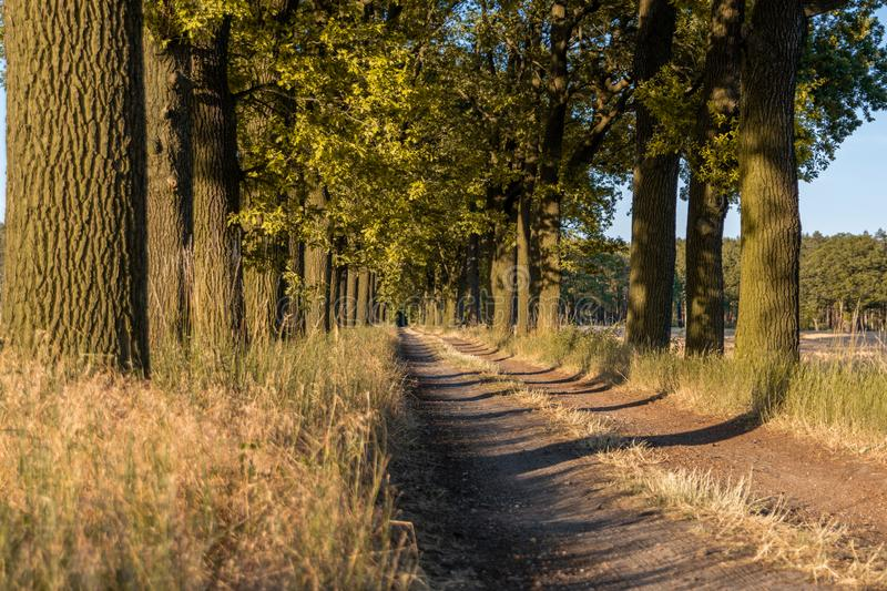 Beautiful evening sunset view of an allee avenue with a line of trees on each side of a gravel road with a dry grass strip. Beautiful evening sunset view of an stock image