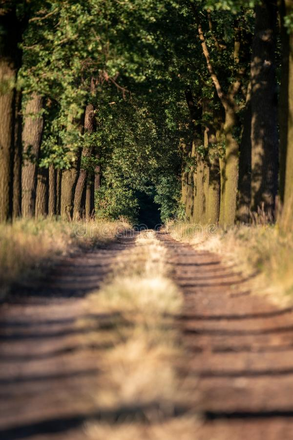 Beautiful evening sunset view of an allee avenue with a line of trees on each side of a gravel road with a dry grass strip. Beautiful evening sunset view of an stock photography