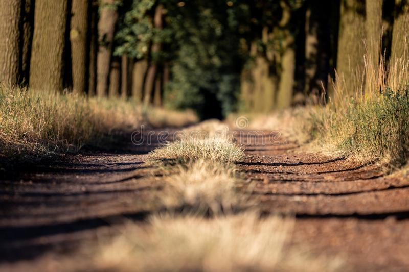 Beautiful evening sunset view of an allee avenue with a line of trees on each side of a gravel road with a dry grass strip. Beautiful evening sunset view of an stock photos