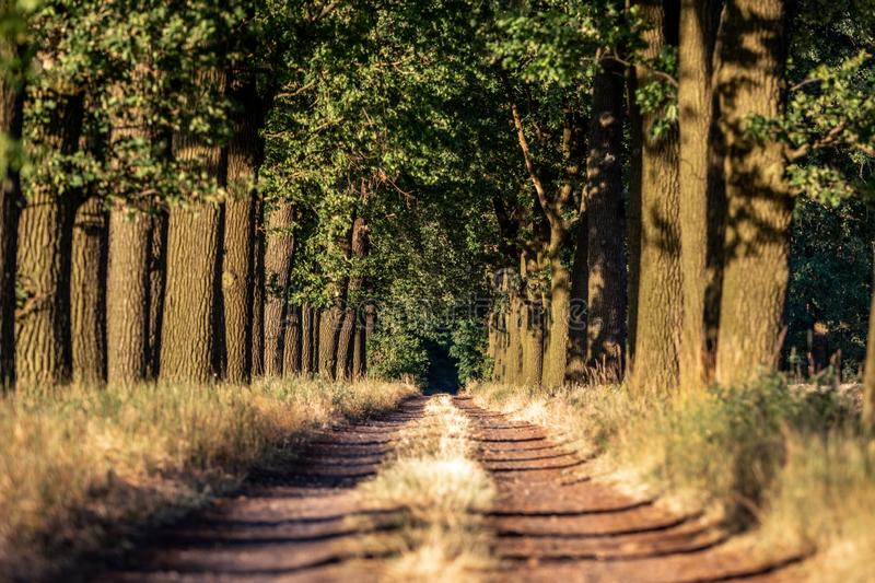 Beautiful evening sunset view of an allee avenue with a line of trees on each side of a gravel road with a dry grass strip. Beautiful evening sunset view of an stock images