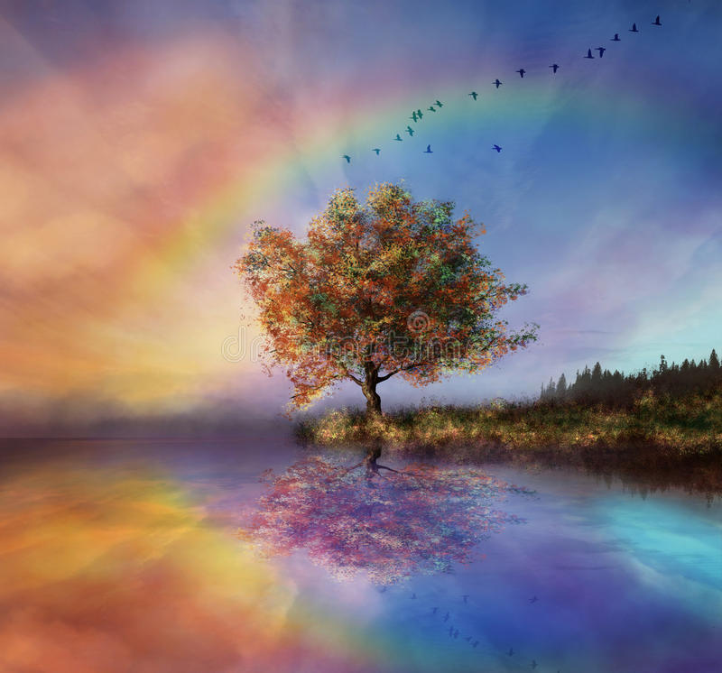 Beautiful evening. A view of a landscape in the evening with an amazing rainbow and a colouring sky vector illustration