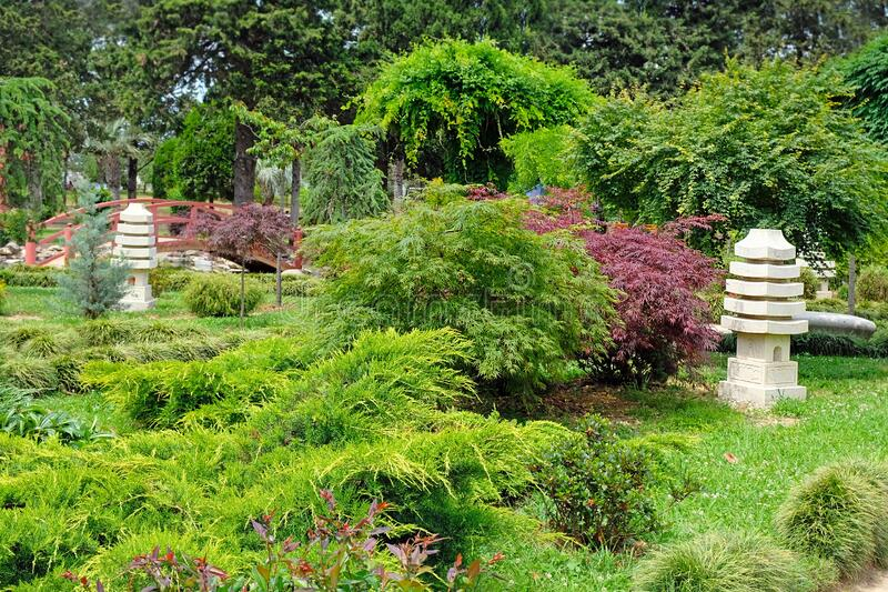 Beautiful evergreen park in Batumi, Georgia. Beautiful summer landscape in the garden. Landscape design, beautiful design of the park area stock photo