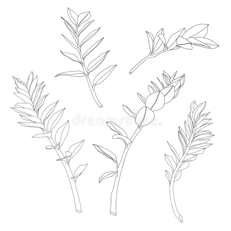 Beautiful exotic Zamioculcas Leaf Silhouette stock illustration