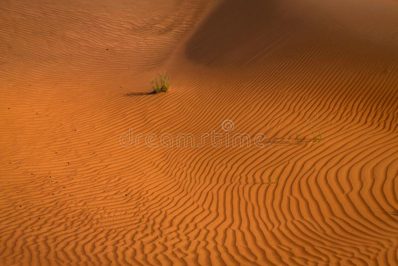Desert sunset exposure near Dubai, United Arab Emirates stock image