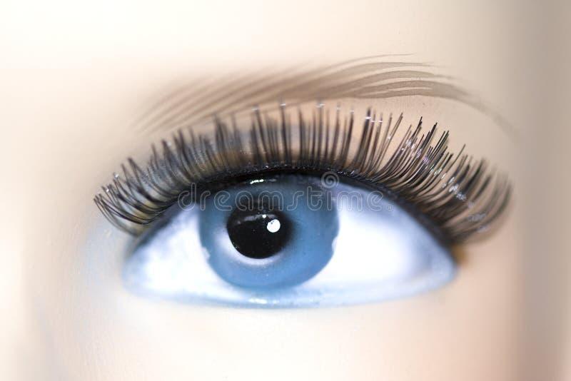 Beautiful eye royalty free stock photo