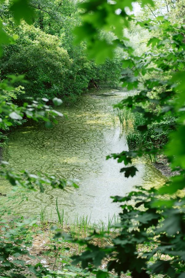 Beautiful fabulous place among the trees. pond with moss stock photo
