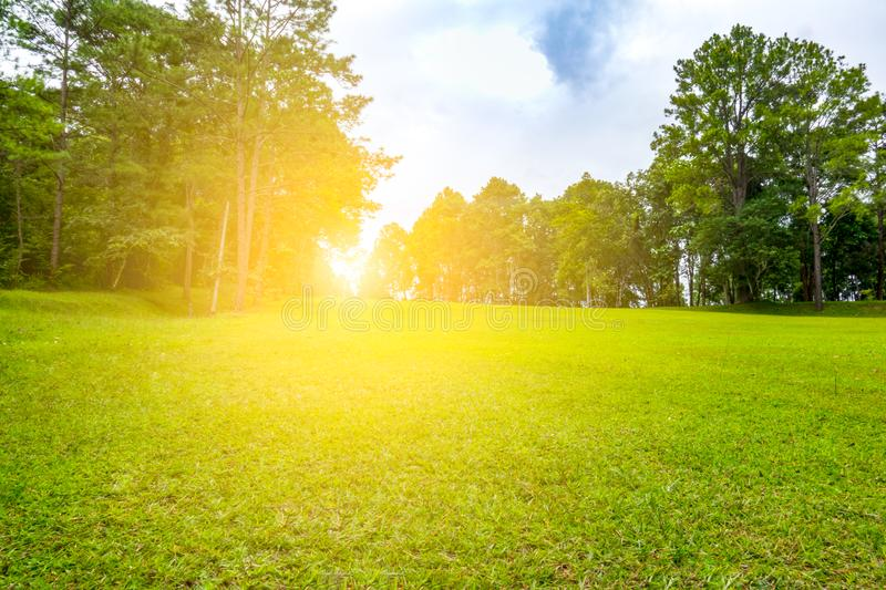 Beautiful fairway in golf course royalty free stock images