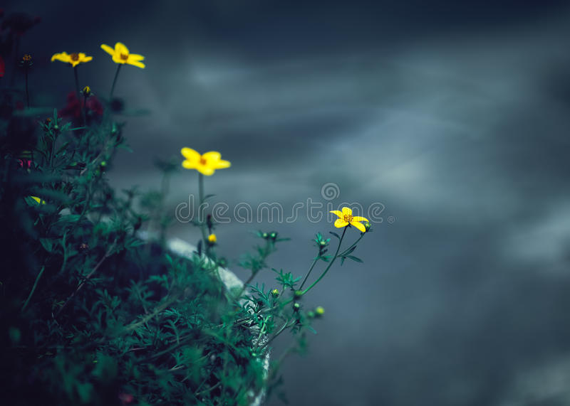Beautiful fairy dreamy magic yellow flowers with dark green leaves in flowerbed stock photography
