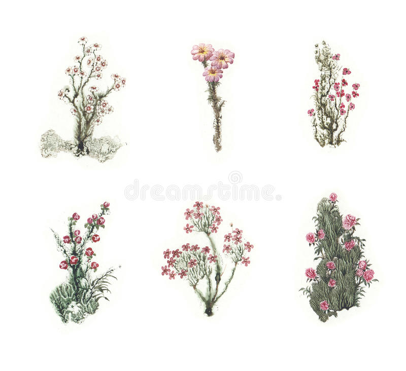 Beautiful fairytale set of colorful watercolor flowers. SET 2 vector illustration