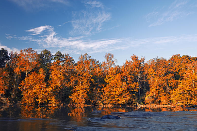 Beautiful fall colors forest stock images