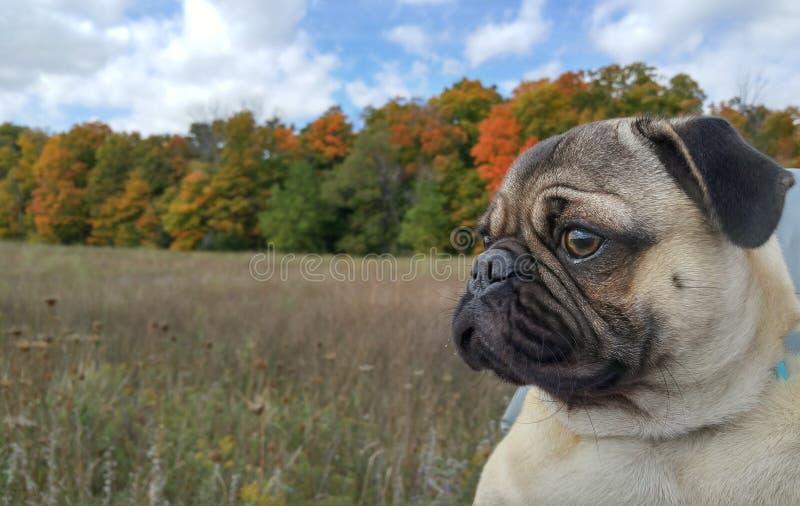 Beautiful fall foliage stock photography