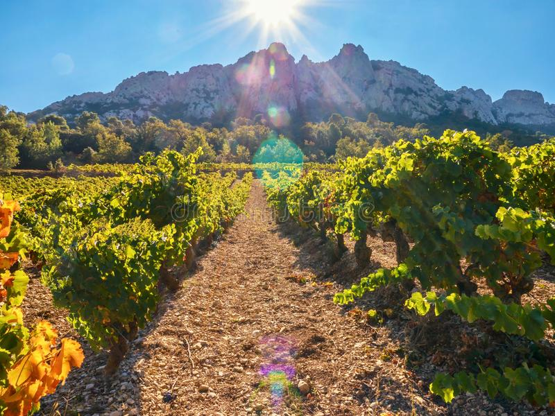 A French vineyard in a dramatic landscape in Provence. A beautiful fall landscape scene of a French vineyard at the base of the spectacular Dentelles de stock photography