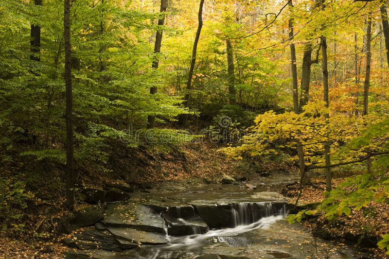 Download Beautiful Fall Scene With Steam And Fall Foliage Stock Image - Image: 1405577
